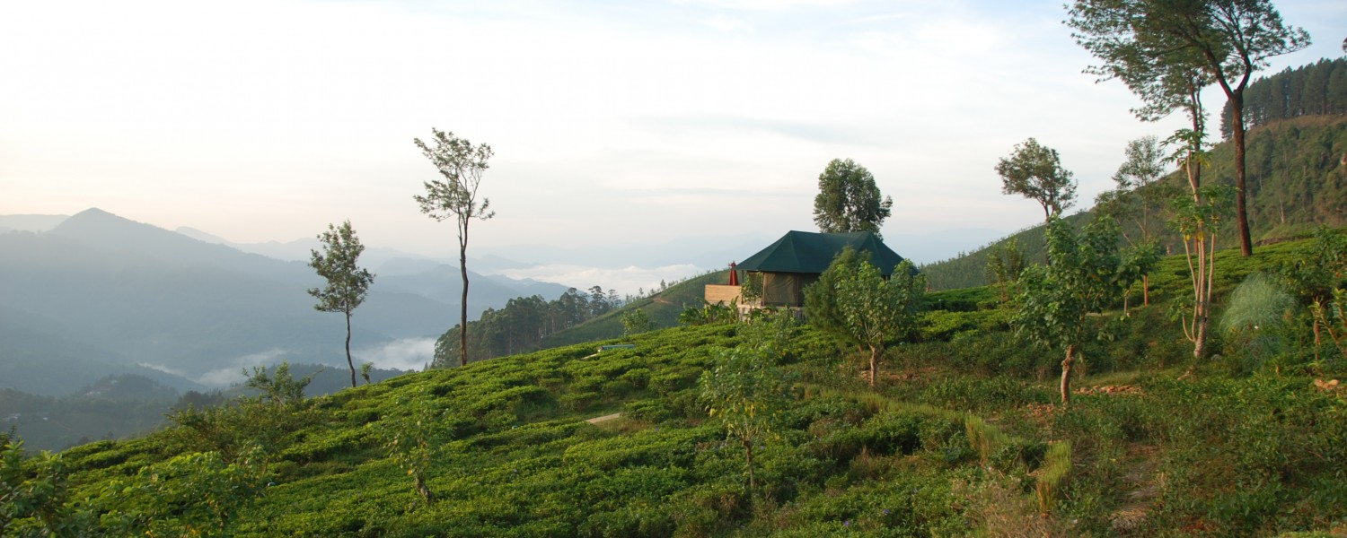 """<p style=""""text-align: left;"""">Meander through tea estates and sample cups of  Sri Lanka's best brews.</p>"""