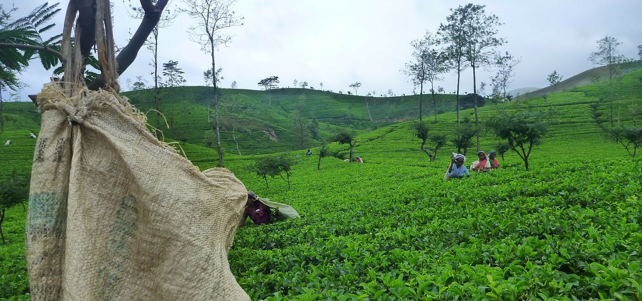"""<p style=""""text-align: left;"""">From World Heritage monuments to the stunning tea plantation region, Sri Lanka packs a lot into a small area.</p>"""