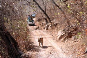 07_Ranthambhore_Safari