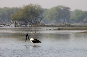 trip-wildlife-of-madhya-pradesh-day-12-kanha