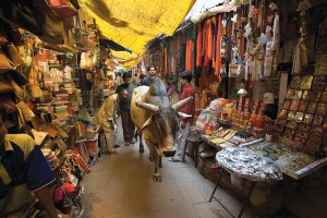 India_-_Varanasi_buey_in_market_-_1702