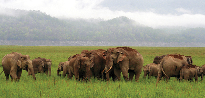<p>Our wildlife themed trips go well beyond spotting a tiger.</p>
