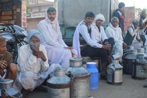Milk Market - Jaipur