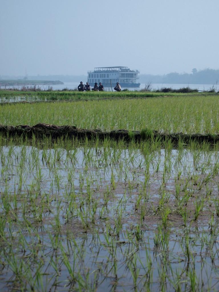 ABN Rajmahal near Paddy field