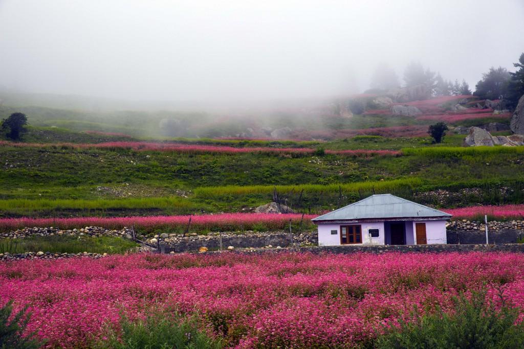 Raksham villege-Sangla valley-Himachal Pradesh